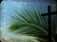 palmcross.jpg