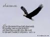 birds_001-640x480.jpg